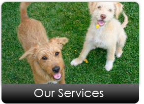 dog_daycare_and_training_services
